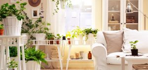 white-living-room-plants-interior-idea-put-forward-wealthy-spotlight-for-living-room-plants-991x470
